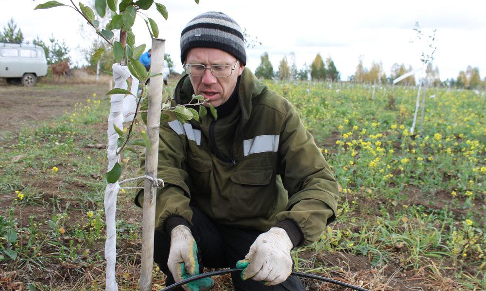 Артём Канунников демонстрирует систему капельного полива