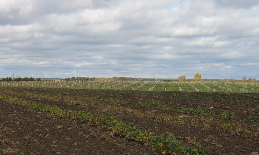 Общая панорама одного из участков интенсивного сада