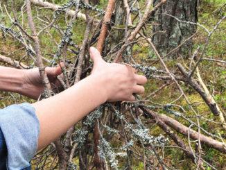 Сходить в лес за валежником и ничего не нарушить