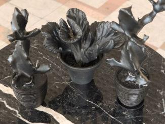 Кактусы в чугунном теле