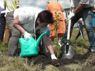 Лариса Александровна Лобашова высаживает молодое деревце с именем Каслинского муниципального района