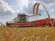 В этом году объемы экспорта сельхозпродукции областного АПК превысят 150 млн долларов