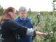Ольга Сегаль и Алексей Кобылин на плантациях интенсивного сада